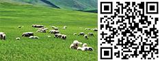 草原养殖羊