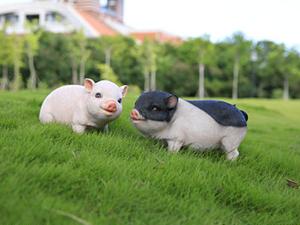 长春国际畜牧业博览会