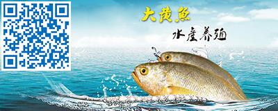 大黄鱼水产养殖
