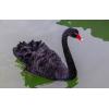 出售黑天鹅苗活体的厂家 珍禽养殖场 哪里可以买到观赏黑天鹅