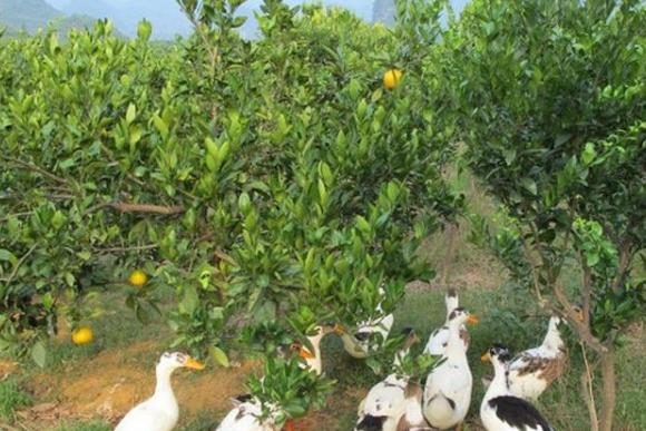 生态养殖物联网平台