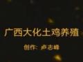 卢老师-土鸡生态养殖 (15播放)