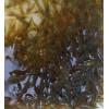 繁殖最快的活虾虾苗可混养小型除藻套餐天然虾宠物虾黑壳活体淡水