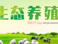 土鸡养殖:生态放养鸡的环境要求标准