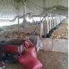 鸡鸭自动传料机料桶料线鸡厂喂料鸭自动料线绞龙养殖设备鹅猪鸽子