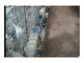 致富经 肉鸽养殖现场技术实现你的未来 (5播放)