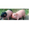 花园装饰 庭院摆件创意礼品小猪模型树脂工艺品动物仿真猪摆件